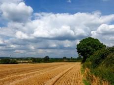 Harvest skies
