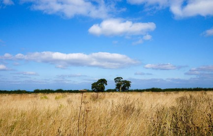 Shropshire savannah!