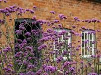 Walled garden: verbena at the bothy,