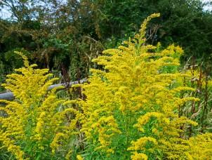 Feral flora