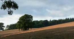 Wheatfield I