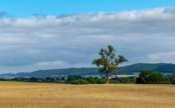 Tree and Wenlock Edge