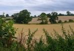 Willey fieldscape