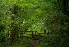 Colemore Green woods