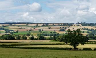 Corvedale cornfields