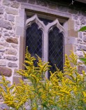 Golden rod and old stone