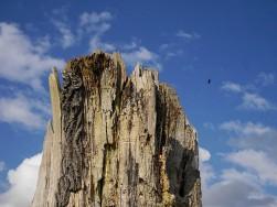 Stump and sky
