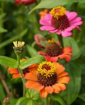 Colour in the walled garden