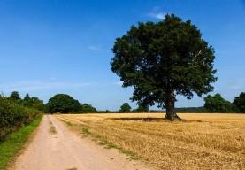 Belswardyne fields