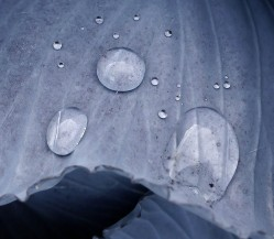 Raindrops on cabbage