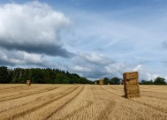 Sentinels of straw