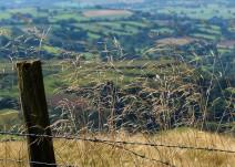 Grasses above the dale