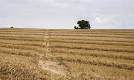 Candlewick field