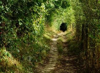 Field's edge path