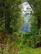 Start here - beside the wood
