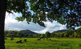 Battle Stones and Caradoc