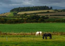 Near Shirlett Farm