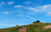 Sheep and Whatsill colliery