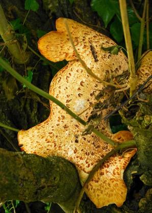 Fungus beside the path