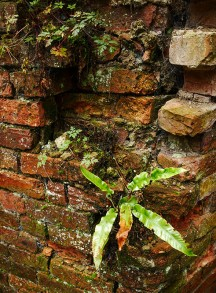 Wall and fern