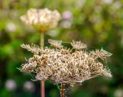 Seed heads...